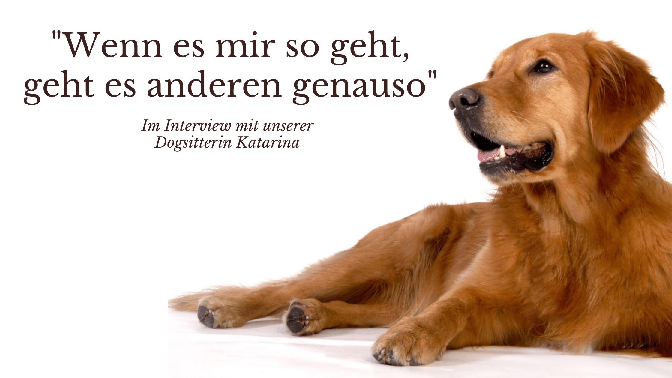 Interview mit unserem Hundesitter