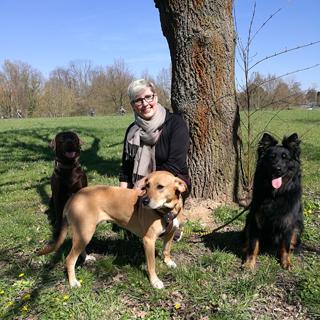 Hundebetreuung Frankfurt Eschersheim-Bre-Bild1