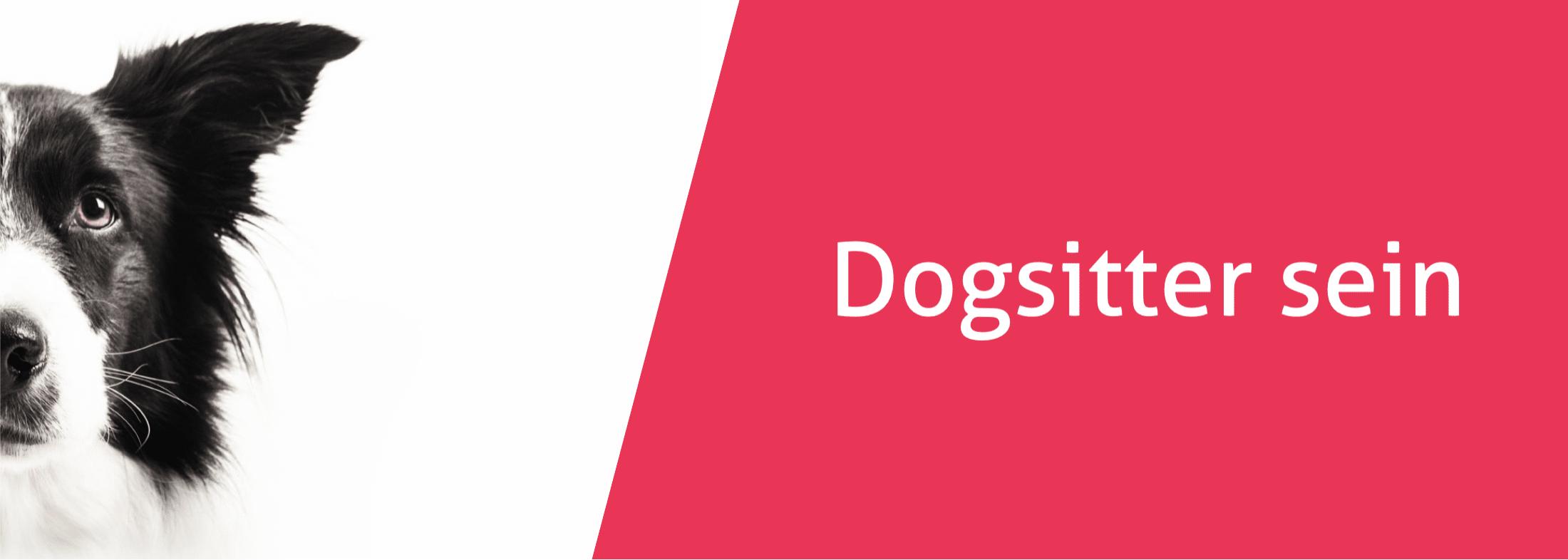 Dogsitter sein