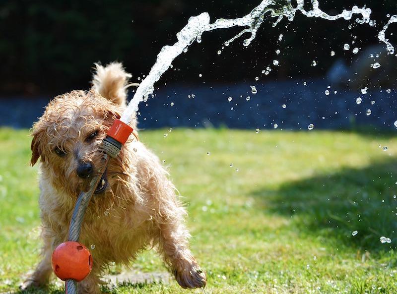 Hund abkühlen bei Hitze in Verbindung mit hoher Luftfeuchtigkeit