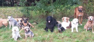 Unser neuer Hundekindergarten