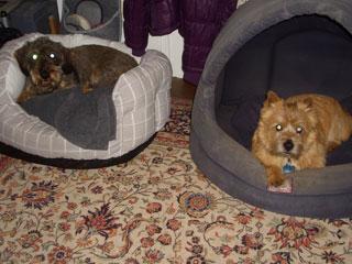 Dogsitter Bad Homburg Brigitte Bild2