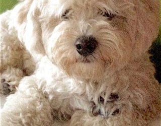 LUISA & Friends TV: Schnelle Hilfe im Notfall – Betreuungsauftrag