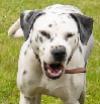 Ratgeber Hund bellt wenn es klingelt