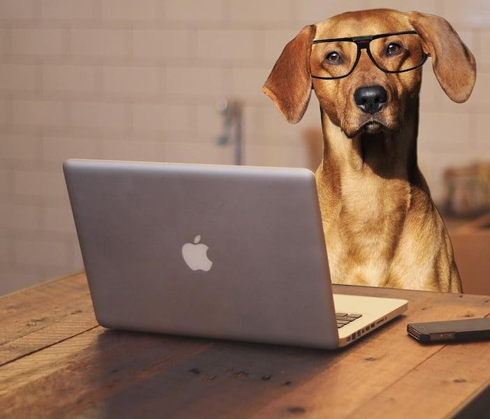 5 wichtigsten Fragen für eine erfolgreiche Dog Sitter Suche