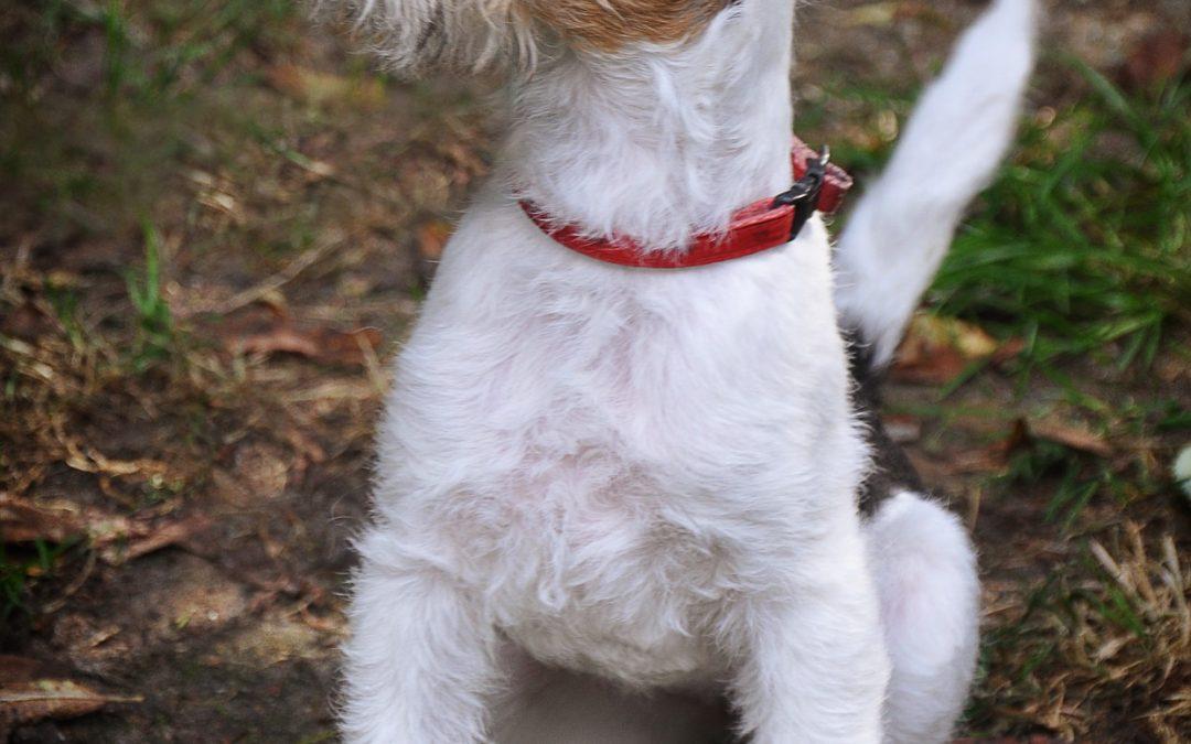 Checkliste und Ratgeber Einzug Welpe oder Tierschutzhund