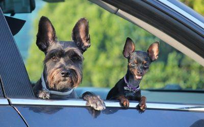 Euer Hund reist mit in den Sommer-Urlaub!